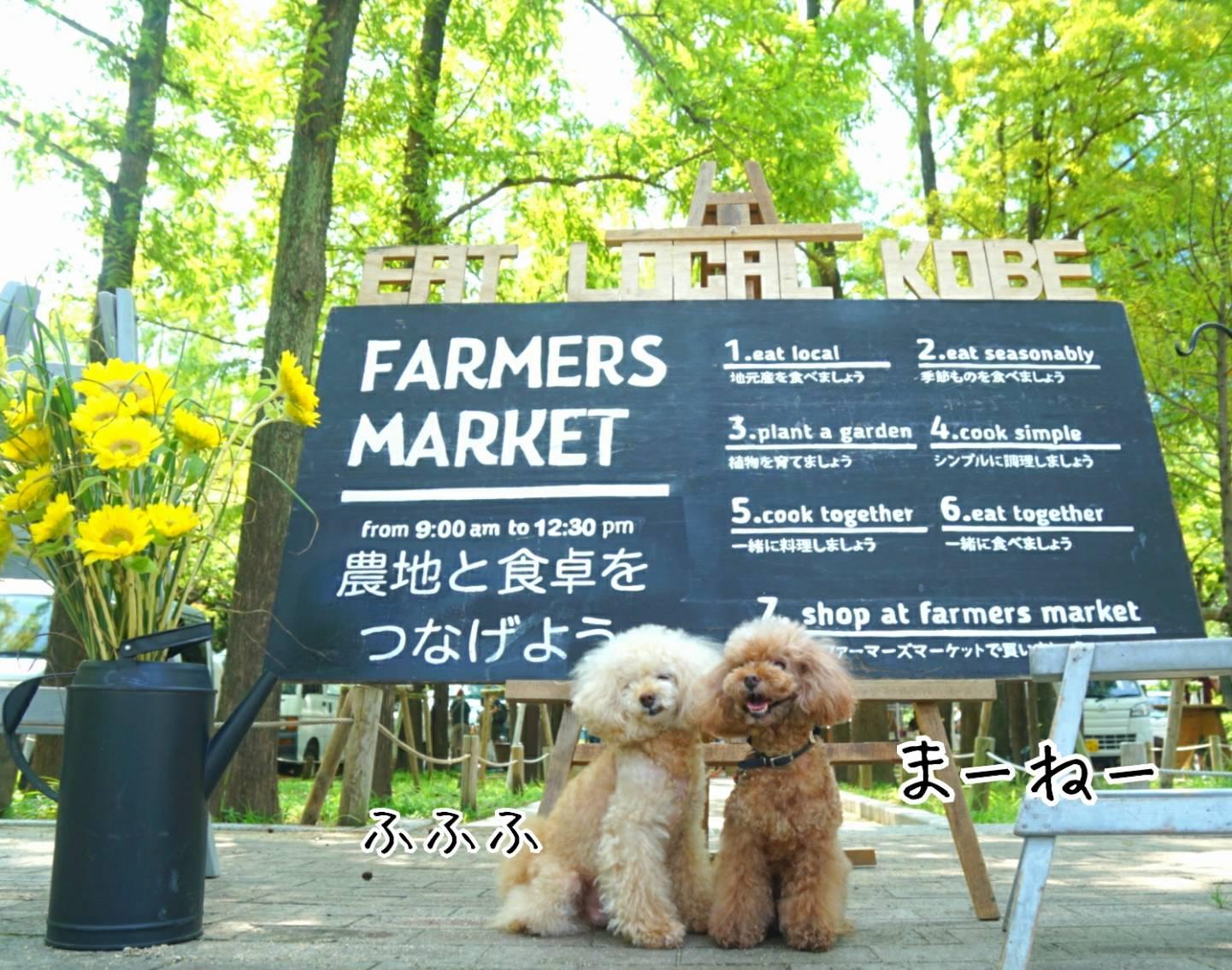 夏のマーケット12