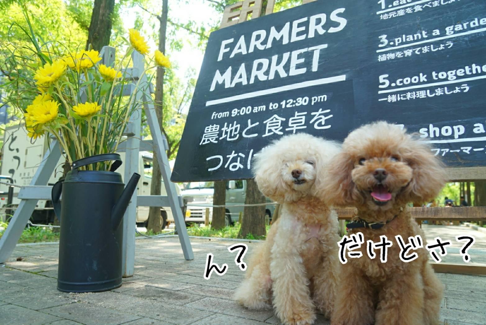 夏のマーケット13