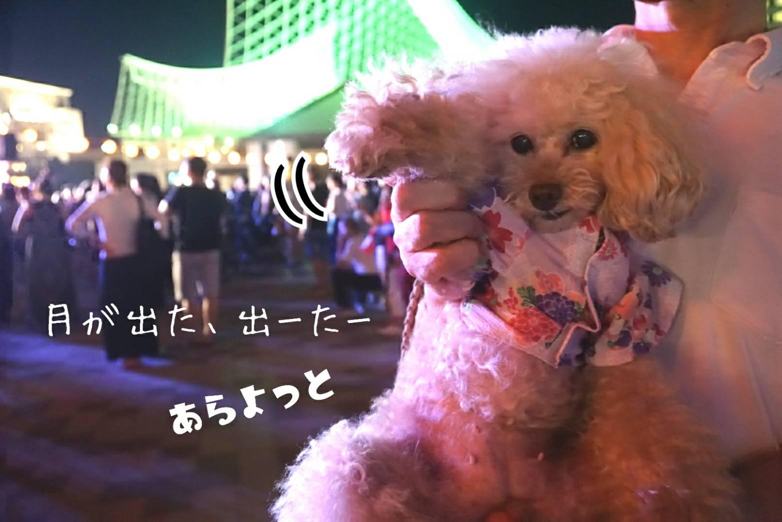 2019盆踊り大会33