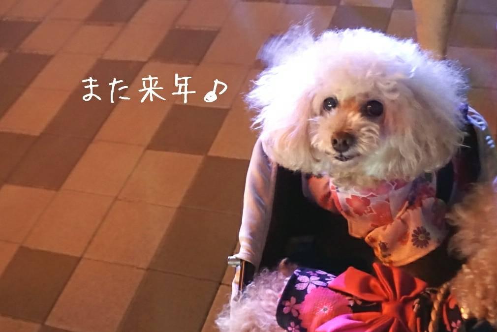 2019盆踊り大会35