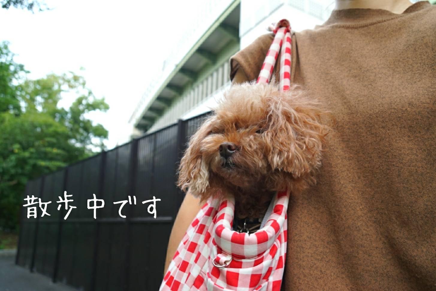 2019銀杏散歩12