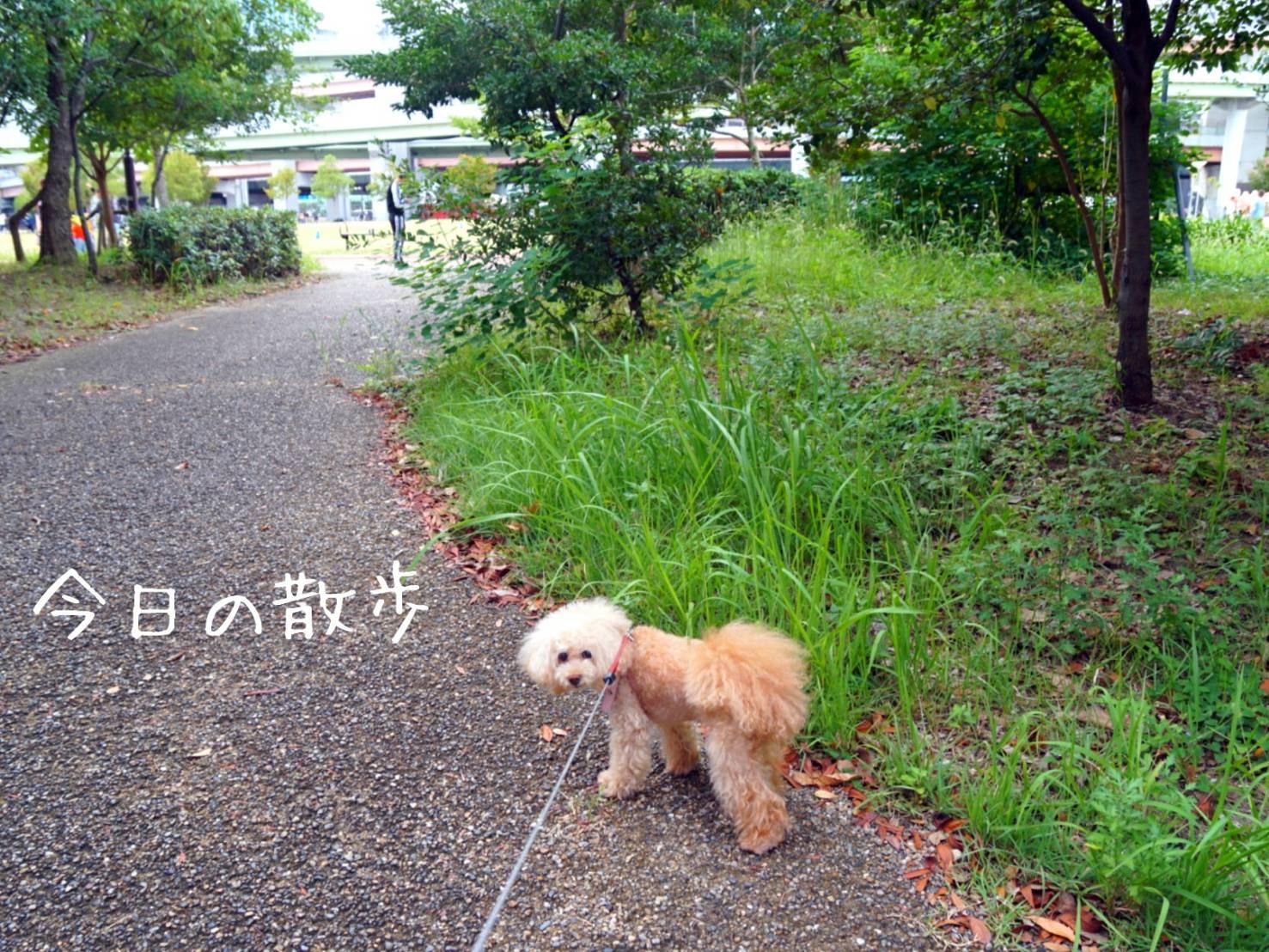 2019銀杏散歩11