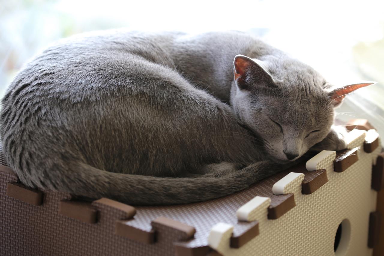 リビング寝