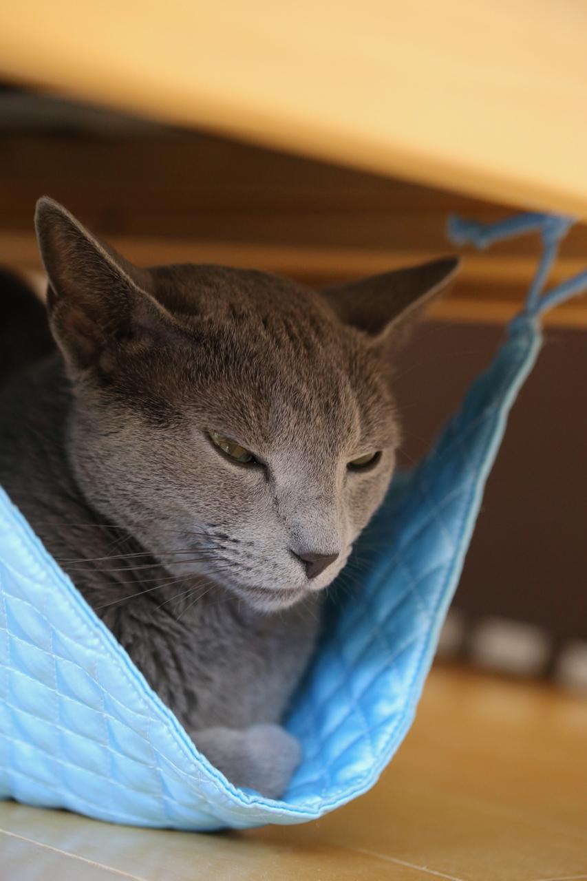 ハンモック寝