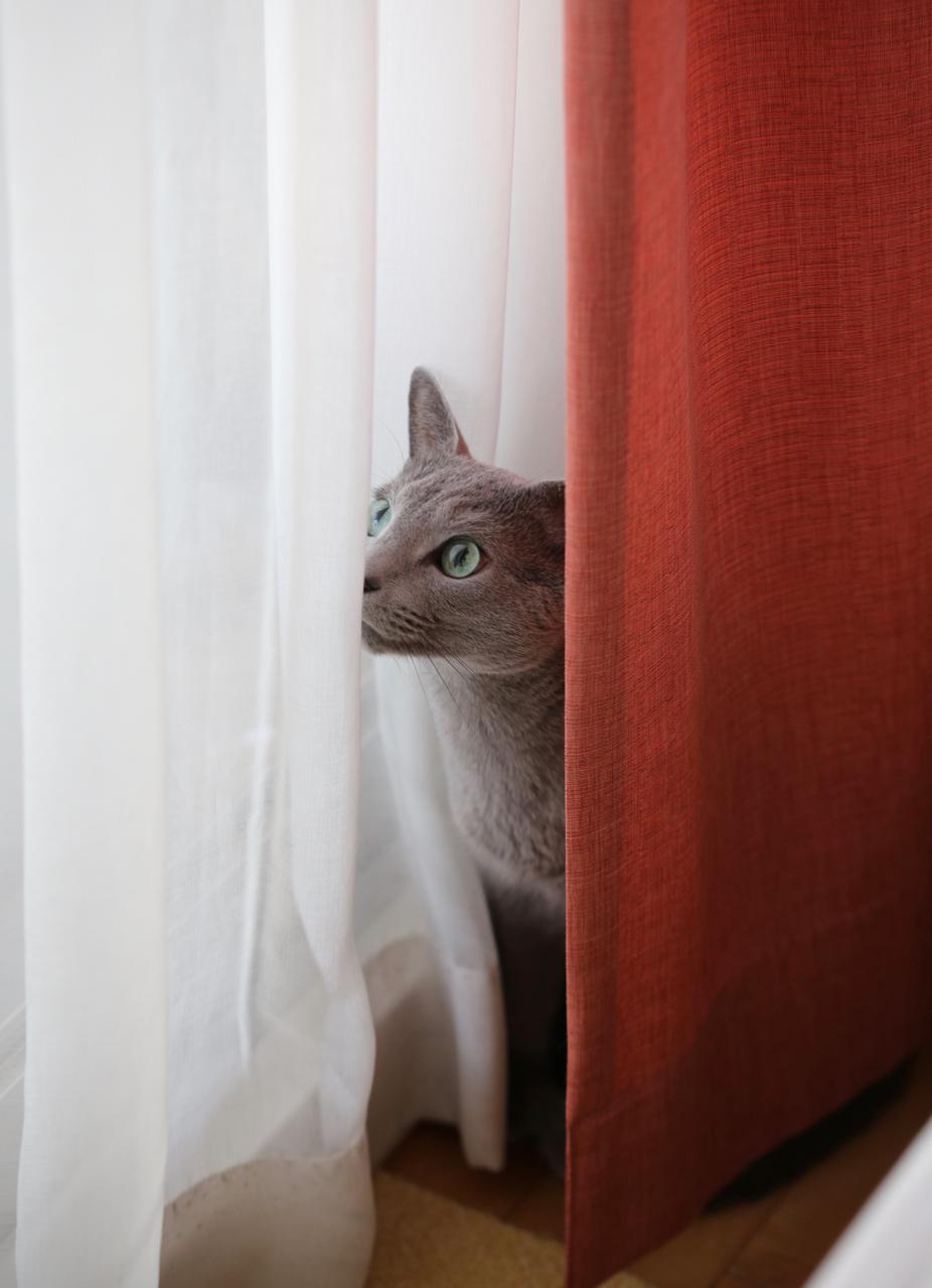 隠れてるの