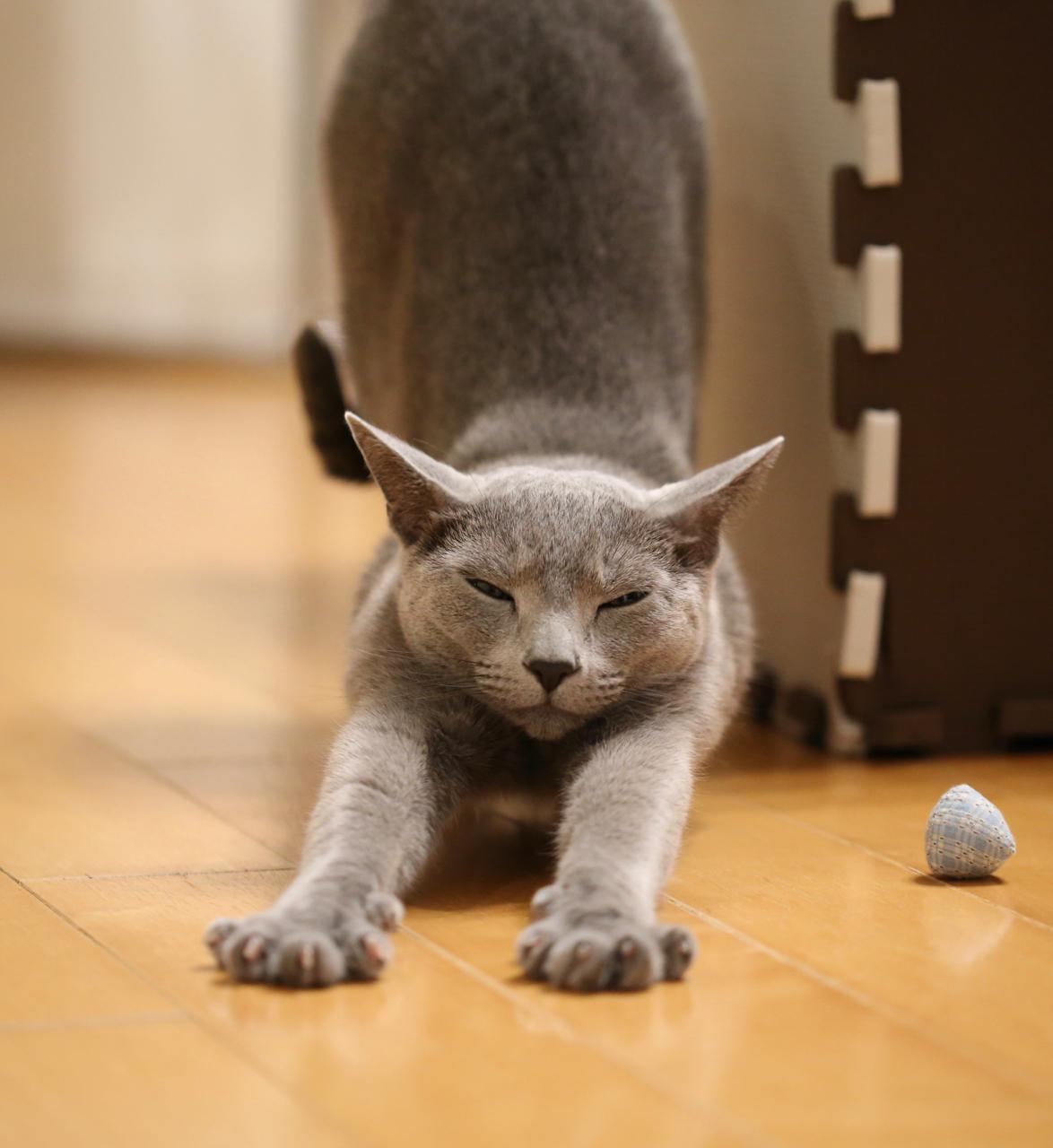 テオ猫のポーズ