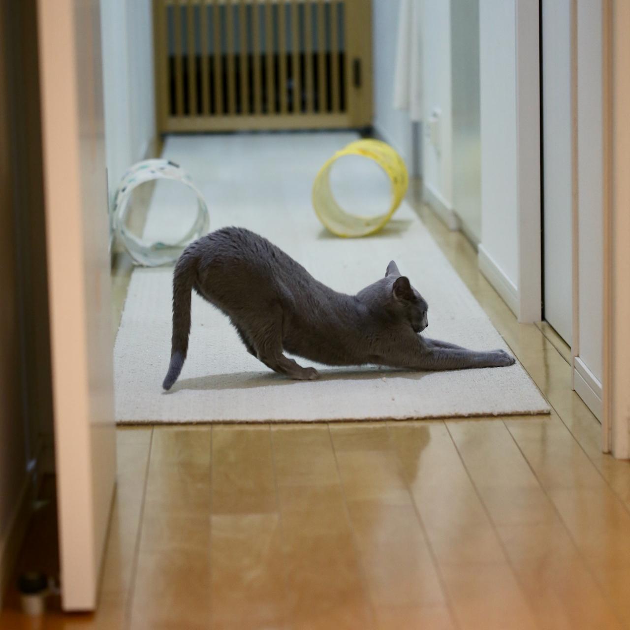 猫のポーズ