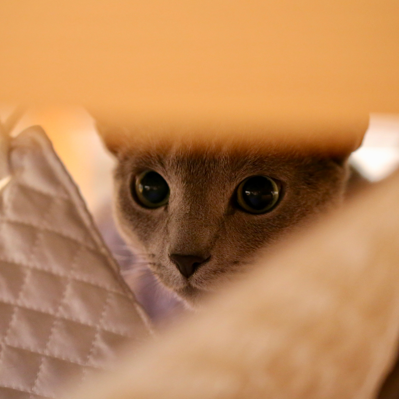 隠れてる2
