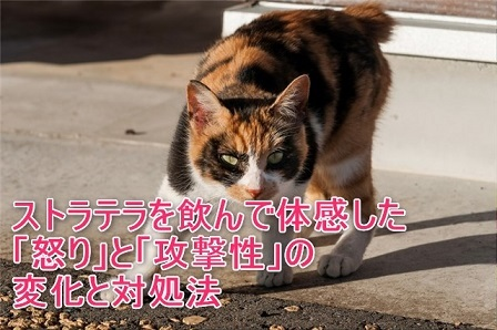 JS745_keikaisuruneko_TP_V4.jpg