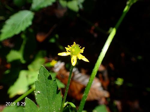 s-黄色の花20190829