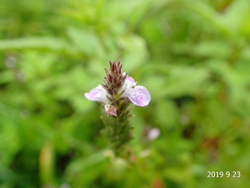 s-紫の花②20190923