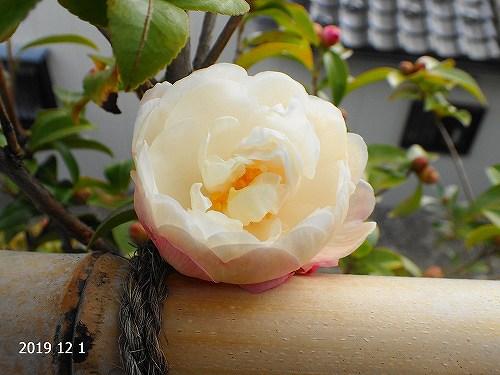 s-還太植物園②20191201