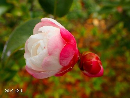 s-還太植物園③20191201