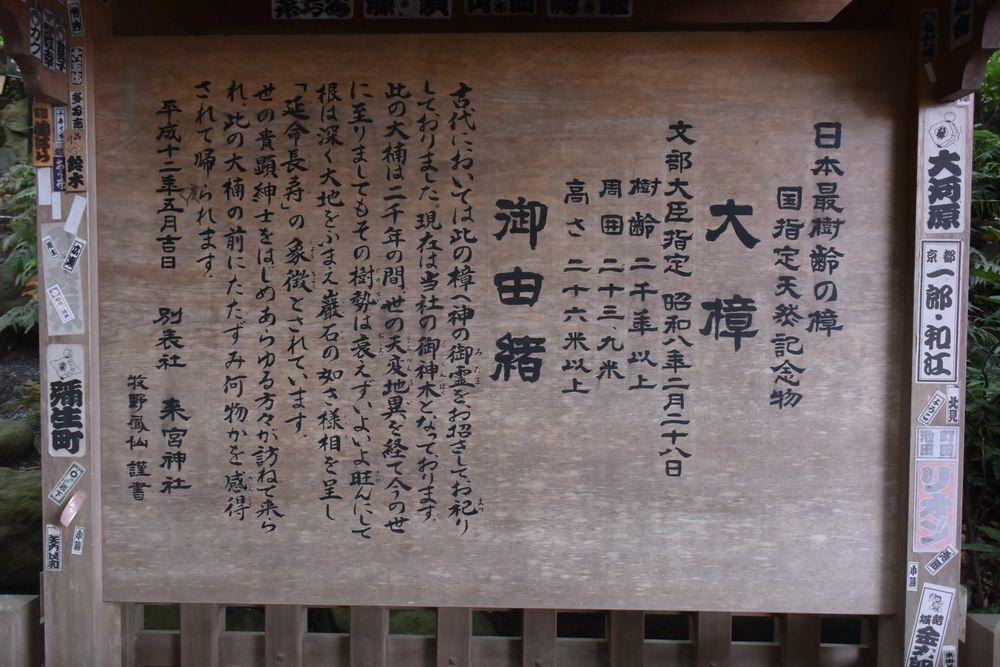 来宮神社御神木-7