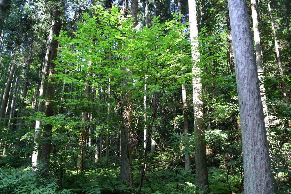 林道を歩く-2