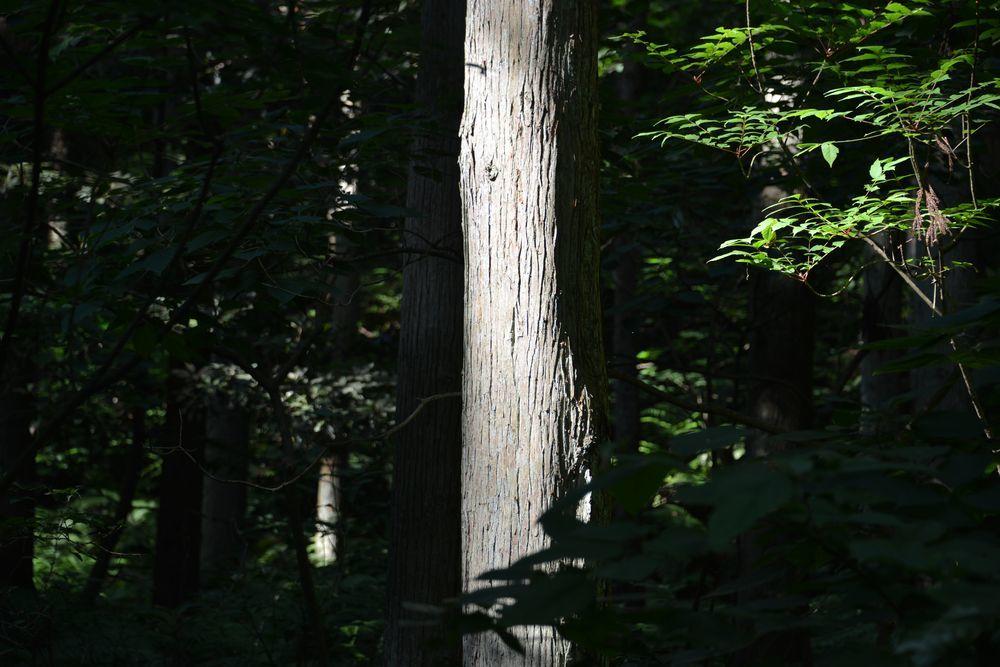 林道を歩く-3