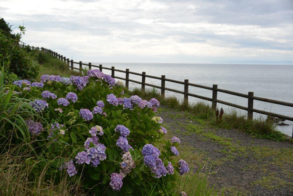 海辺に咲く-4