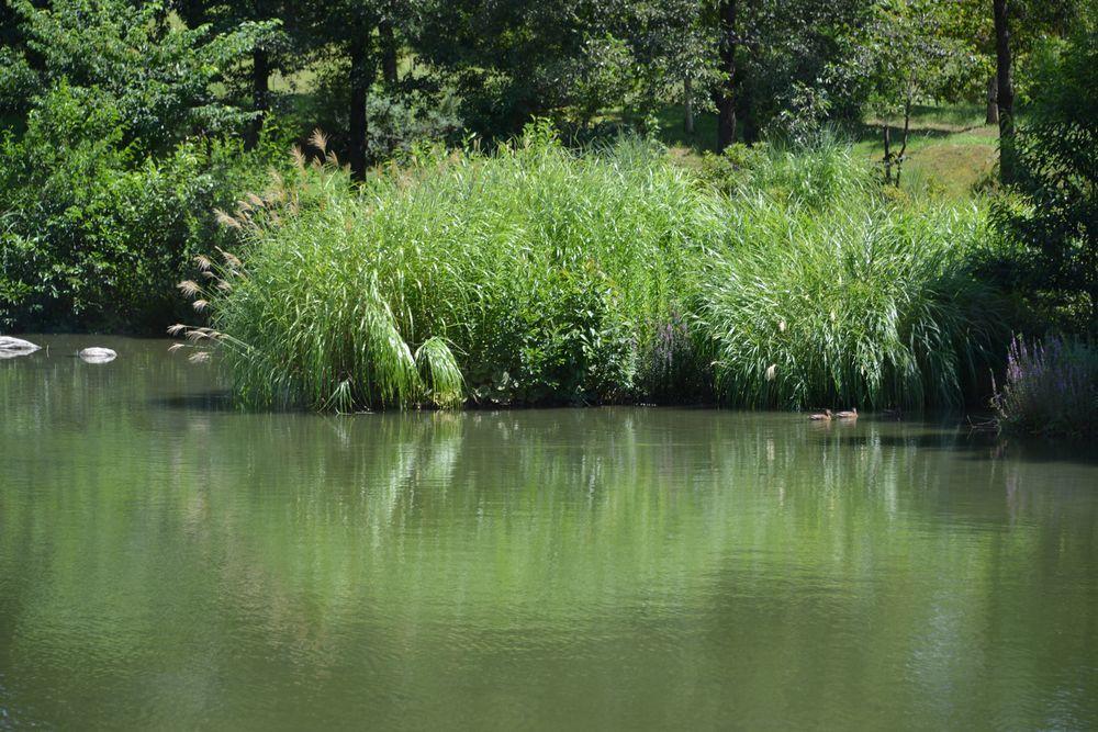 水辺の公園-3