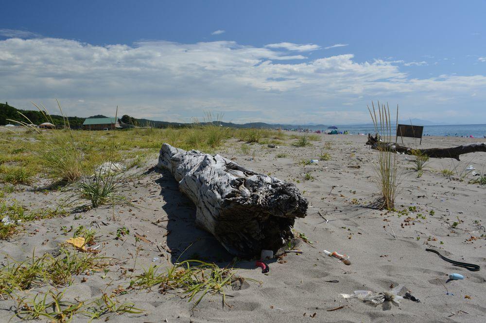 浜の流木-1