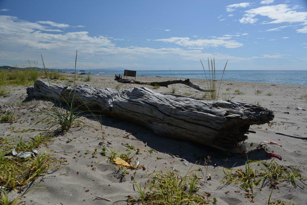 浜の流木-2