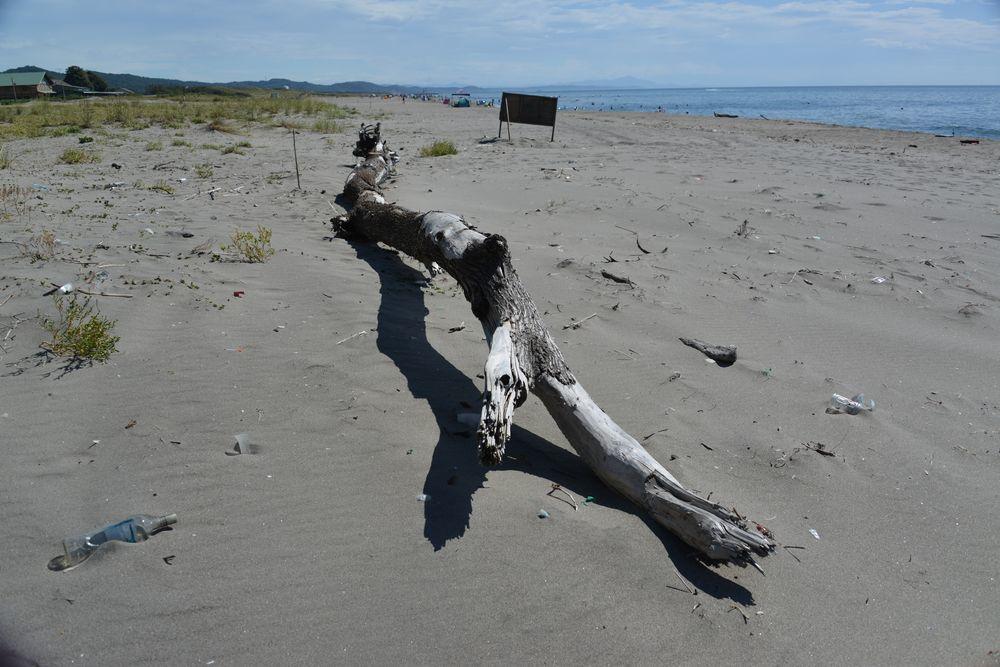 浜の流木-3