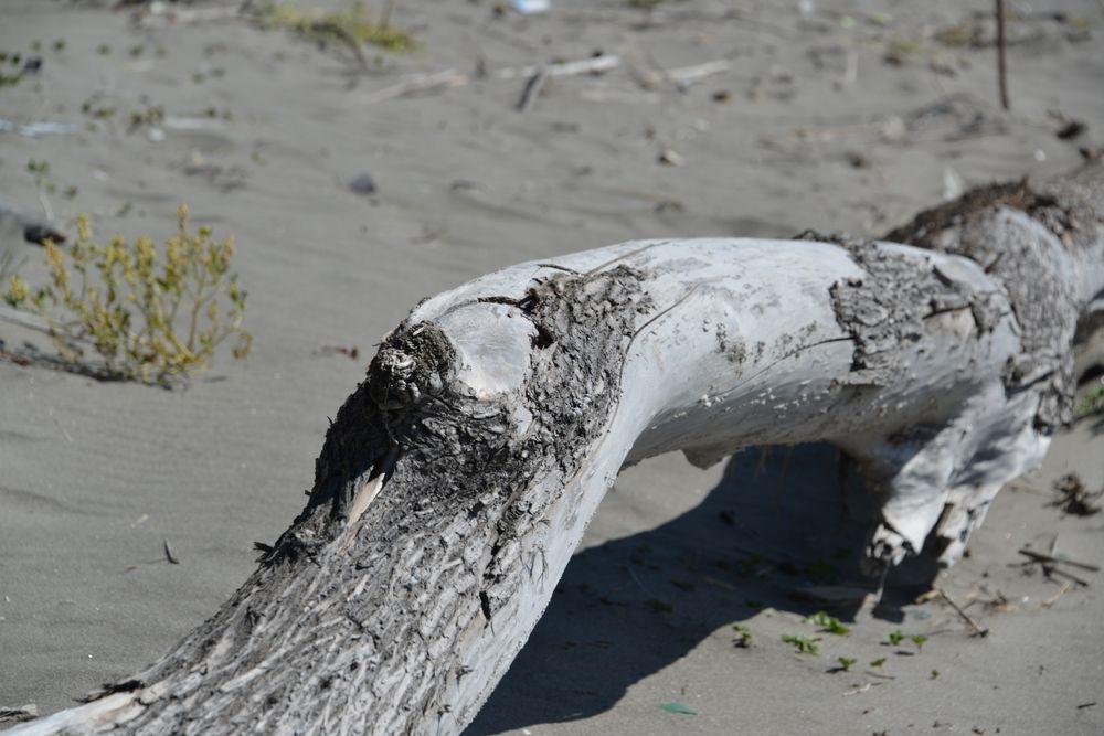 浜の流木-4