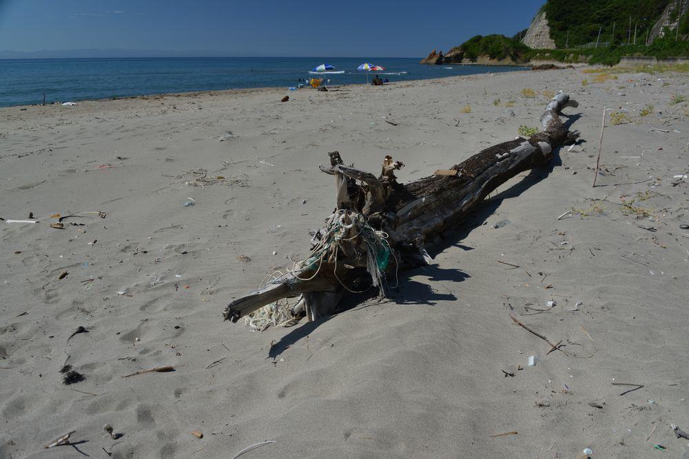 浜の流木-5