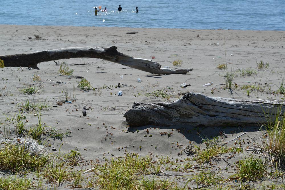 浜の流木-6