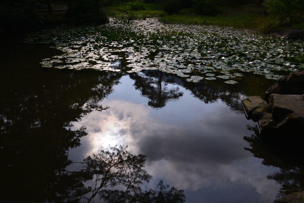 蓮の池-6