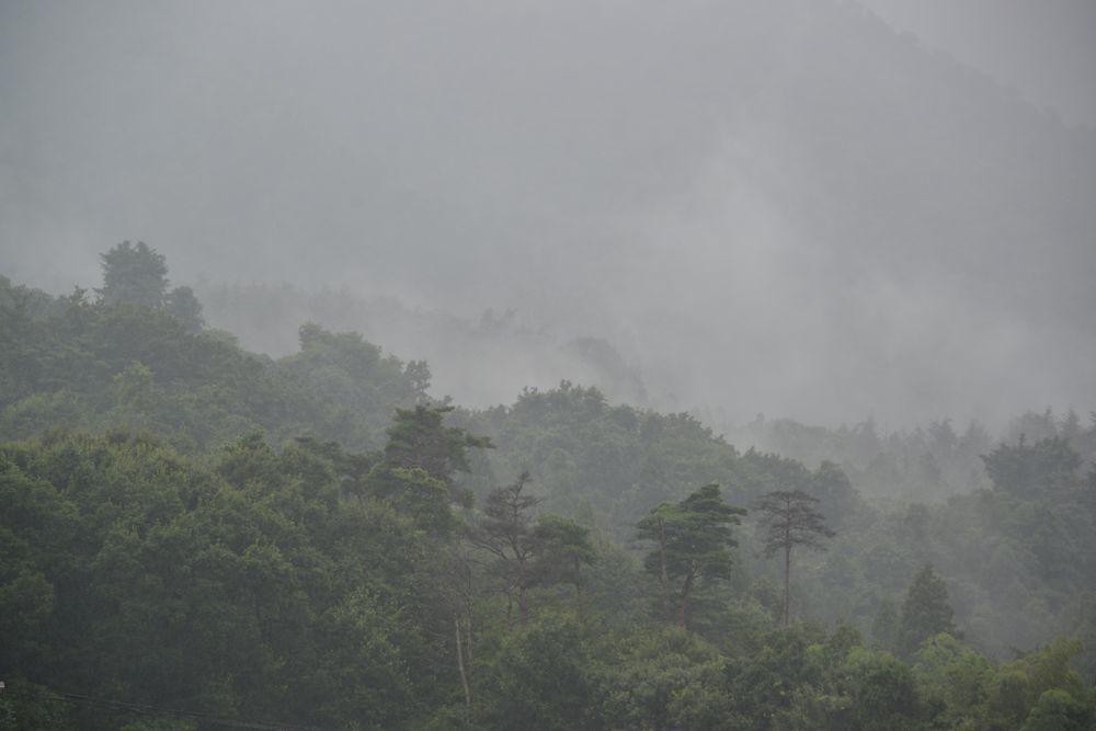 雨に煙る-2