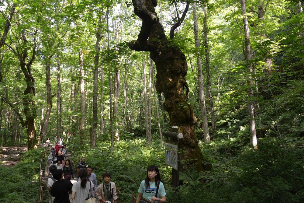 銚子大滝-4
