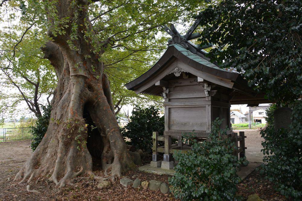 神社と大木-1