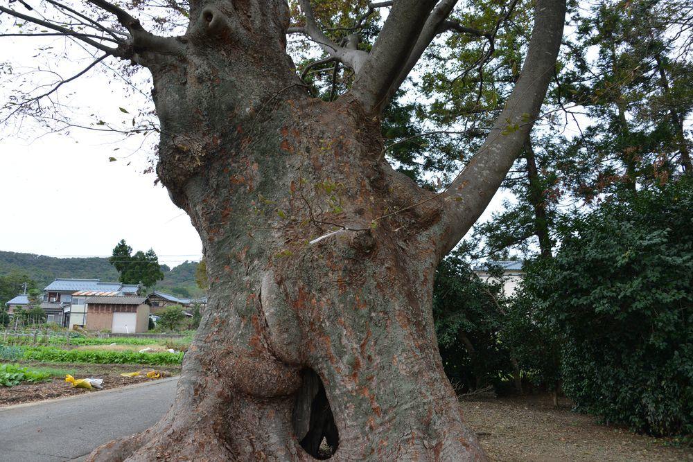 神社と大木-3