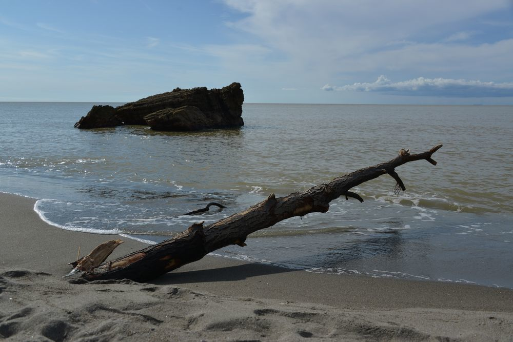 海岸に流木-3