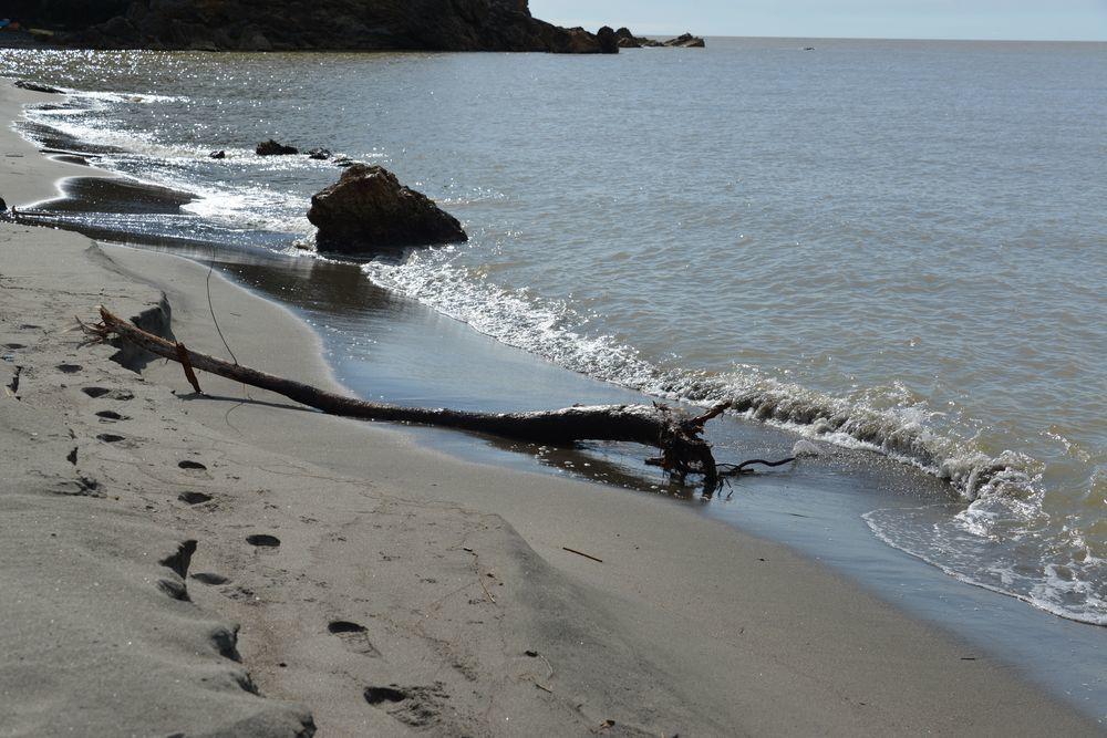 海岸に流木-5