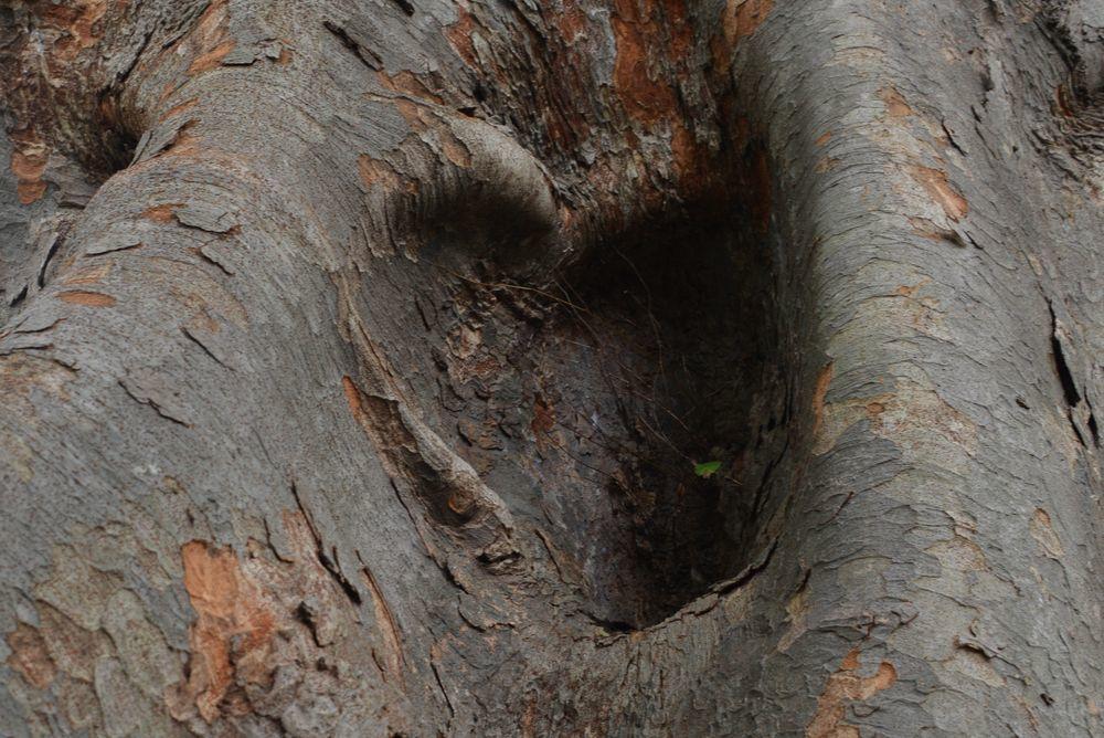 樹の歴史-2