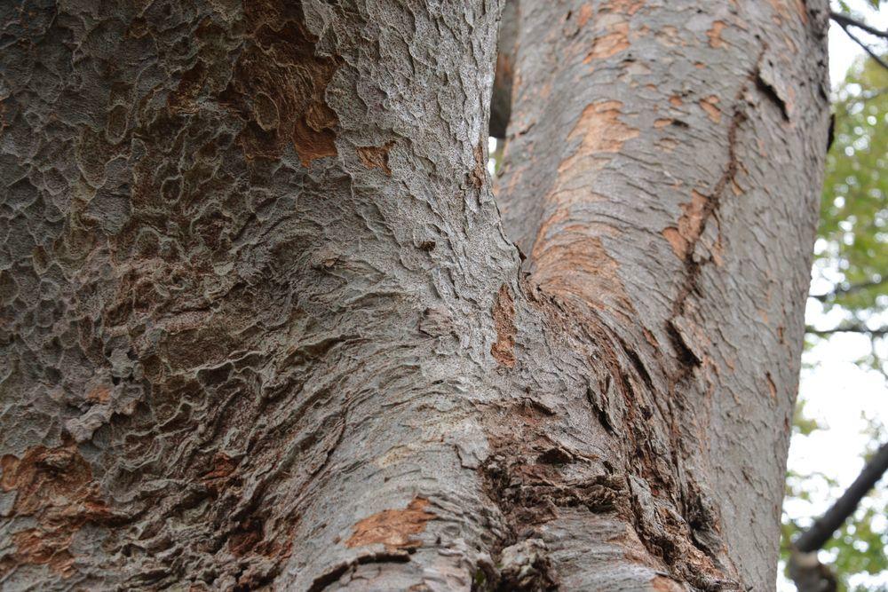 樹の歴史-5