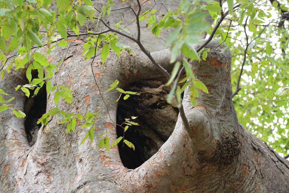 樹の歴史-6