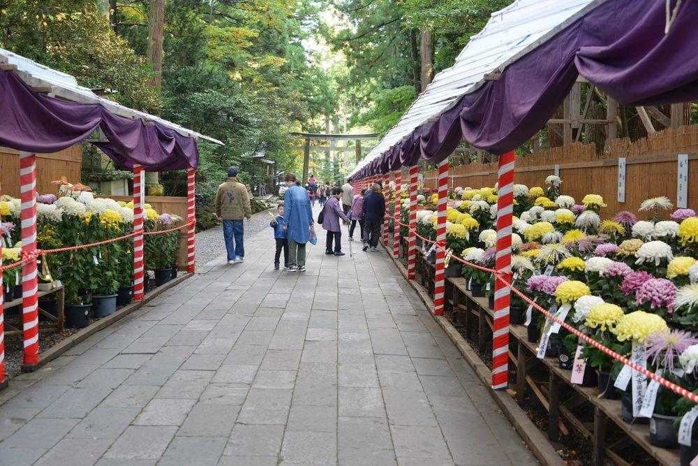 菊祭り-3
