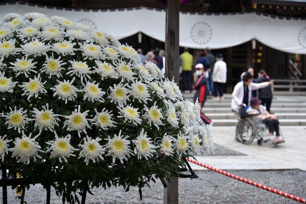 菊祭り 大菊-2