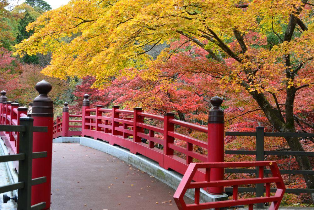 もみじ 観月橋-1
