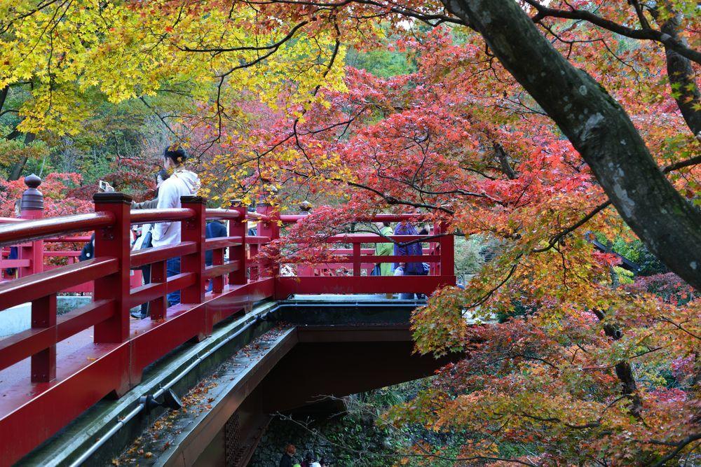 もみじ 観月橋-2