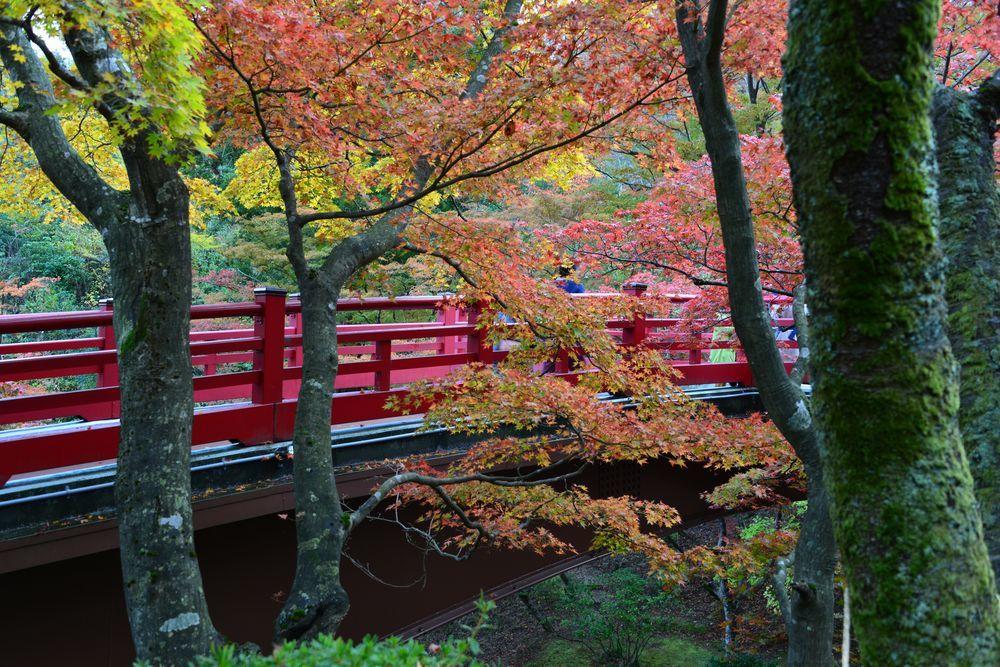 もみじ 観月橋-3