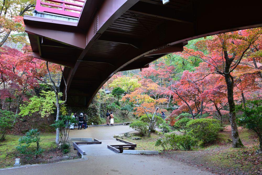 もみじ 観月橋-4