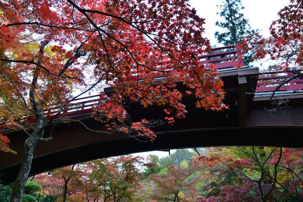 もみじ 観月橋-5