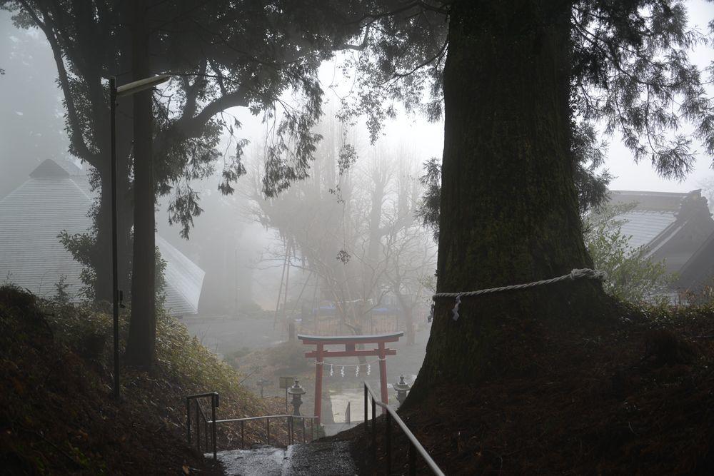 村山浅間神社の樹-1