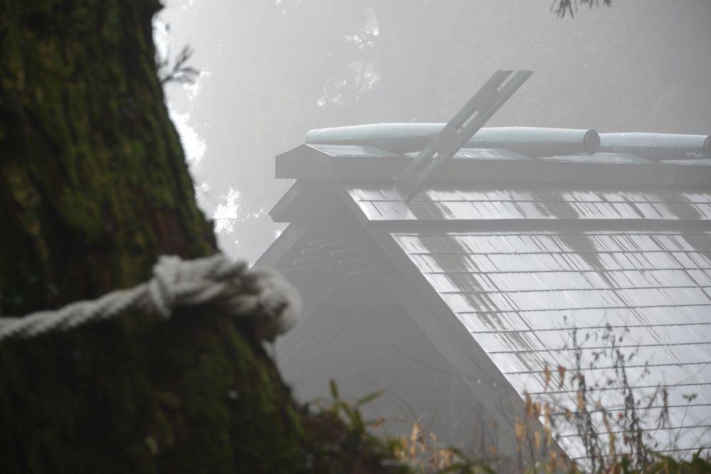 村山浅間神社の樹-2