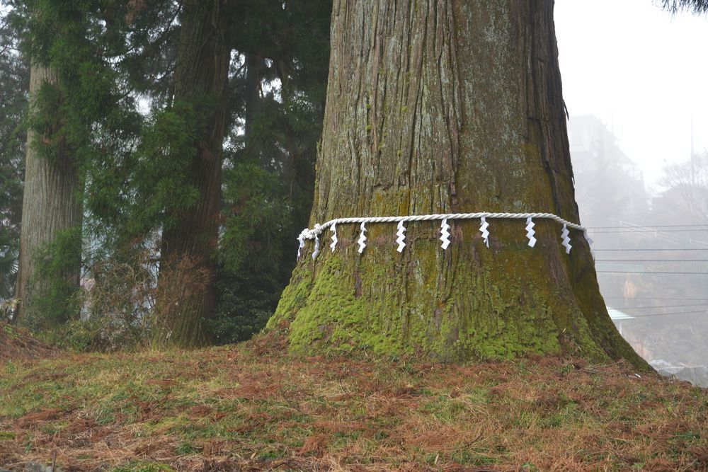 村山浅間神社の樹-7