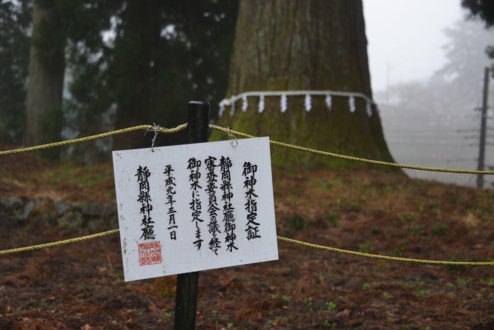 村山浅間神社の樹-8