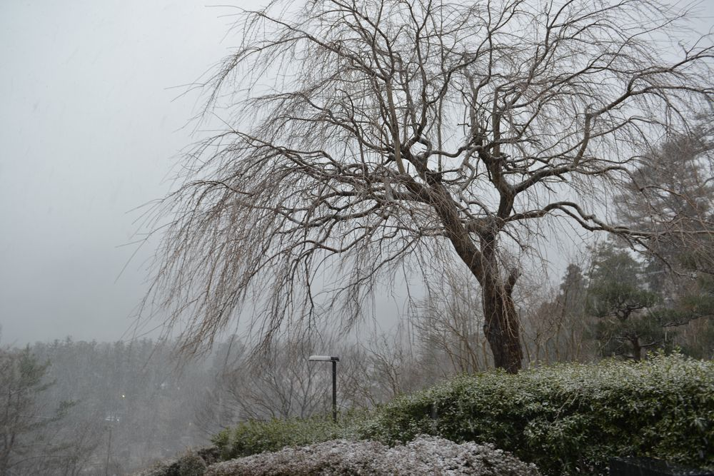 雪の公園-1